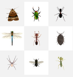 Realistic ant midge spider and other vector