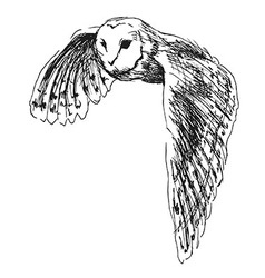 Hand sketch flying owl vector