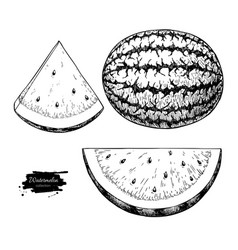 Watermelon and slice drawing set isolated vector