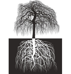 Wisteria tree along with roots vector