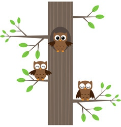 Three owls vector