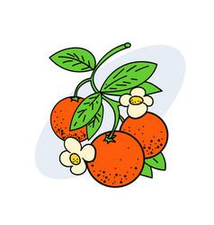 Branch of oranges vector