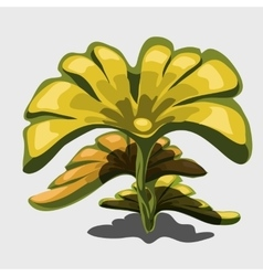 Yellow exotic plant with large leaves vector image vector image