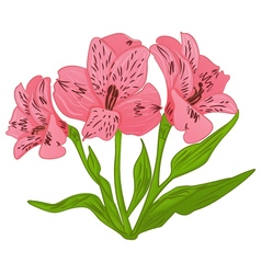 Alstroemeria cartoon pink flower and green leaves vector image vector image