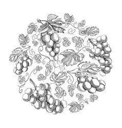 Circle pattern bunches of grape doodle vector