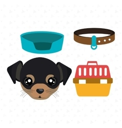dog plate collar vector image