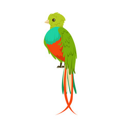 Bright colorful bird with a long tail colorful vector