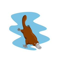 Platypus diving vector