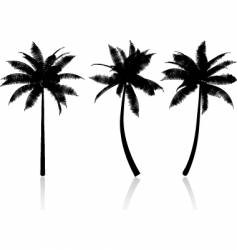 palm tree graphics vector image vector image