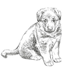 Puppy of german shepherd vector