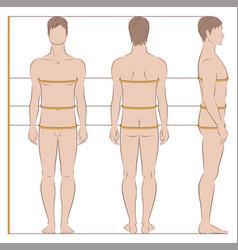 Men body measurements vector