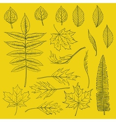 Set of autumn leaves drawn in thin lines vector image