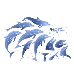 Graphic dolphins collection vector