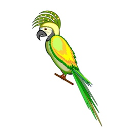 A parrot macaw isolated on a white background vector
