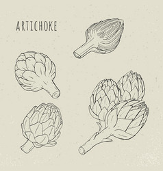 artichoke set hand drawn botanical plant vector image