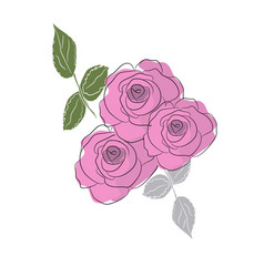 Roses are blooming vector