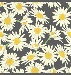 floral seamless pattern with camomile vector image vector image