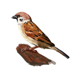 Tree sparrow holding on twig isolated on white vector