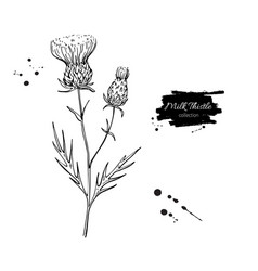 Milk thistle flower drawing set isolated vector