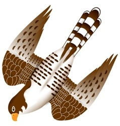 Falcon in flight vector