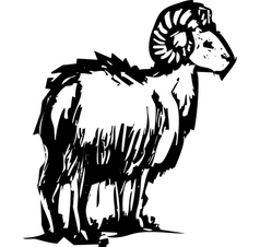 Bighorn sheep vector