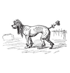 Skinny dog vintage vector
