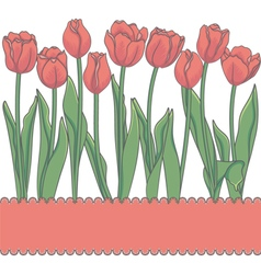 Card with red tulips and place for an inscription vector