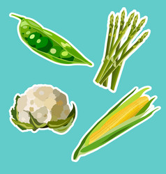 set of flat cartoon vegetables stickers vector image