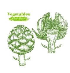 Artichoke Hand Draw Sketch vector image vector image