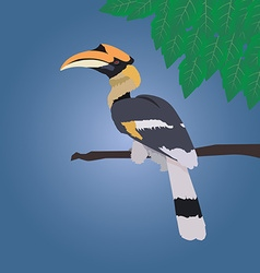 Great hornbill stand on the branch on blue vector image vector image