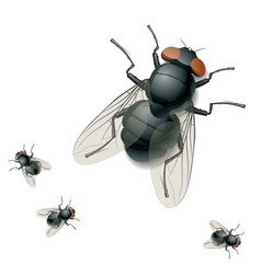 housefly vector image vector image