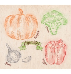 Vegetables pepper pumpkin garlic broccoli country vector