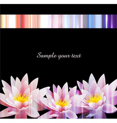 holiday background with a water lily vector image vector image