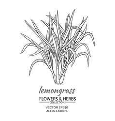 lemongrass vector image vector image