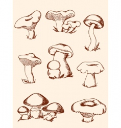 Set of vintage forest mushrooms vector