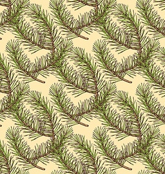 Sketch pine branch in vintage style vector