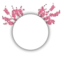 Branches with pink flowers and buds cherry vector