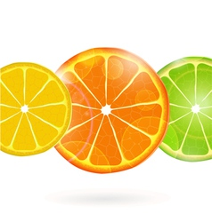 Citrius Fruit Slices vector image
