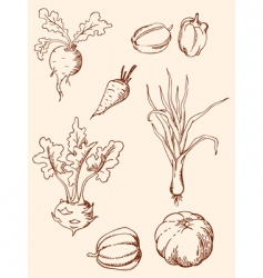 Hand drawn vintage vegetables vector