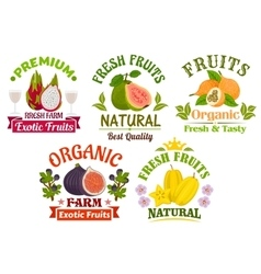 Fresh juicy natural organic fruits icons set vector image