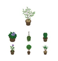 Isometric houseplant set of houseplant peyote vector