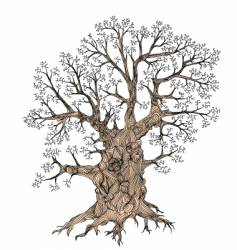 gnarled tree vector image vector image