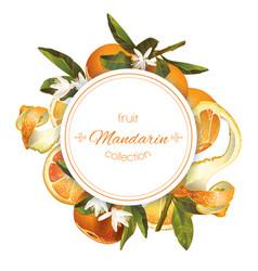 Mandarin round banner vector