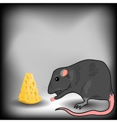 Rat and cheese vector