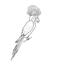 A monochrome sketch of macaw parrot vector image