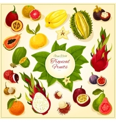Tropical and exotic fruits icons vector