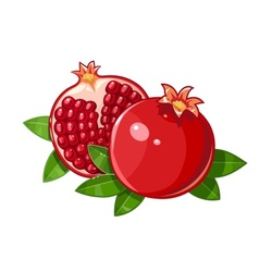 Couple juicy ripe pomegranate vector
