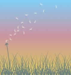 dandelion sunset vector image