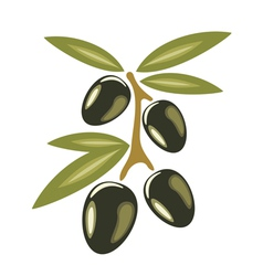 black olives symbol vector image