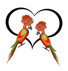 A couple of macaw parrots with a heart vector